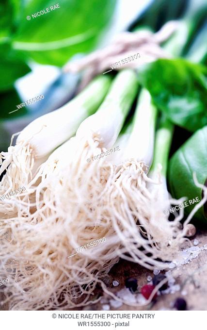 Green Onion close up shoot