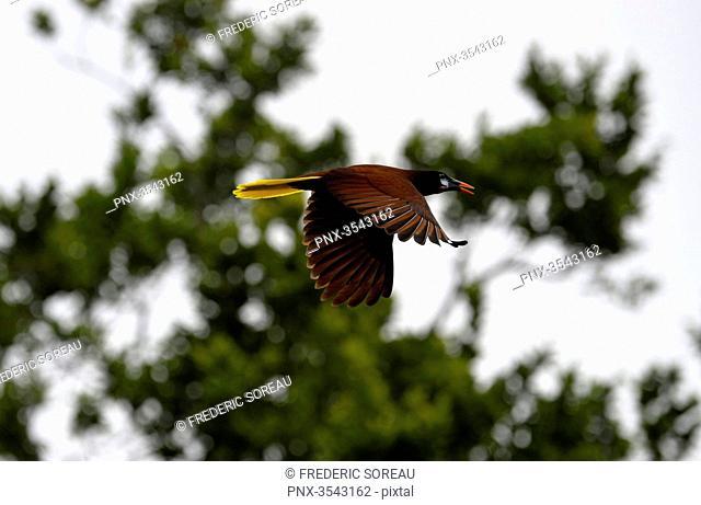a bird in Tikal, Guatemala, Central America
