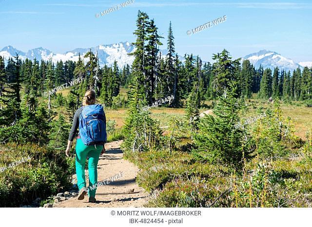 Hiker on hiking trail Panorama Ridge, Forest and Mountains, Garibaldi Provincial Park, British Columbia, Canada