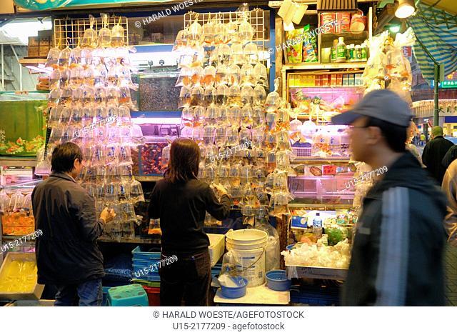 Hong Kong, China, Asia. Hong Kong Kowloon. Gold Fish Market on Tung Choi Street. Typical toy fish display in plastic bags