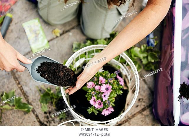 A woman planting up a basket with flowers, and adding soil around the base of the plant