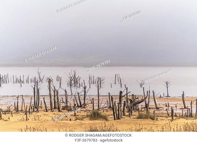 Receding water exposes trees that had bee covered by water after winter rains. Teewaterskloof Dam, Western Cape Province, South Africa