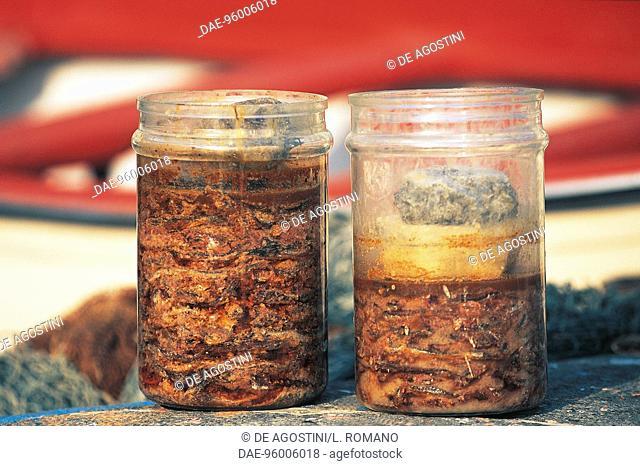 Colatura di alici (anchovy extract) of Cetara, Campania, Italy
