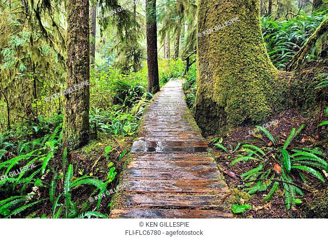Boardwalk in the Rainforest Trail, Pacific Rim National Park, Vancouver Island, British Columbia, Canada