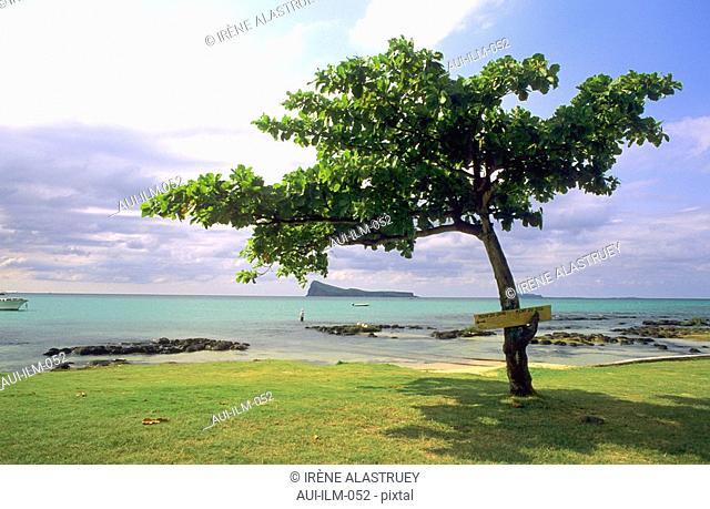 Mauritius - North-East Region - Cap Malheureux - seashore - tree