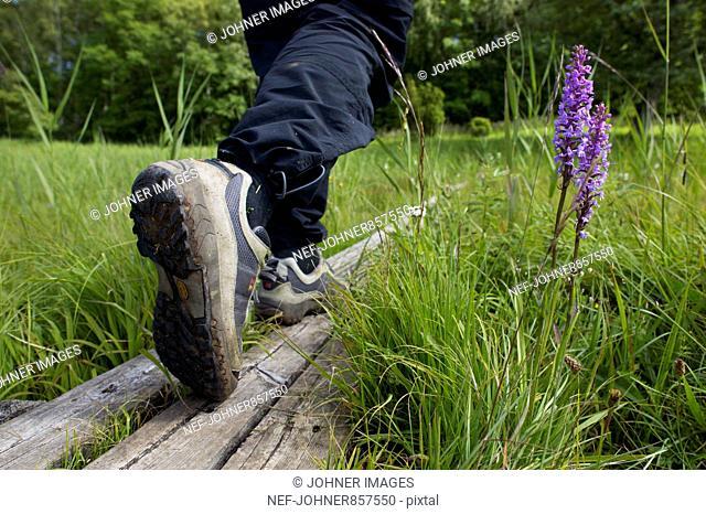 Man walking on a plank, Sweden