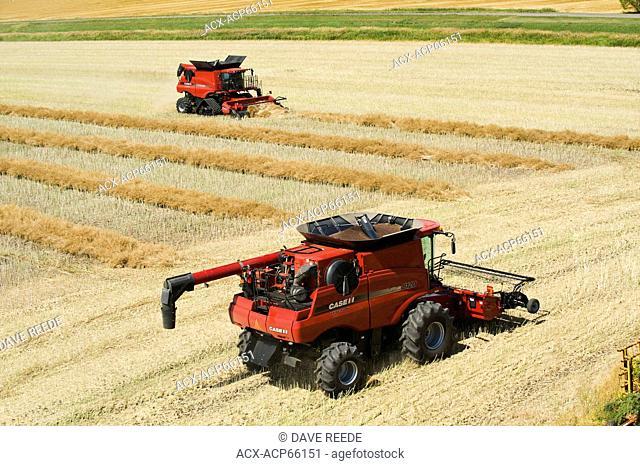 combines harvest swathed canola, near Dugald, Manitoba, Canada