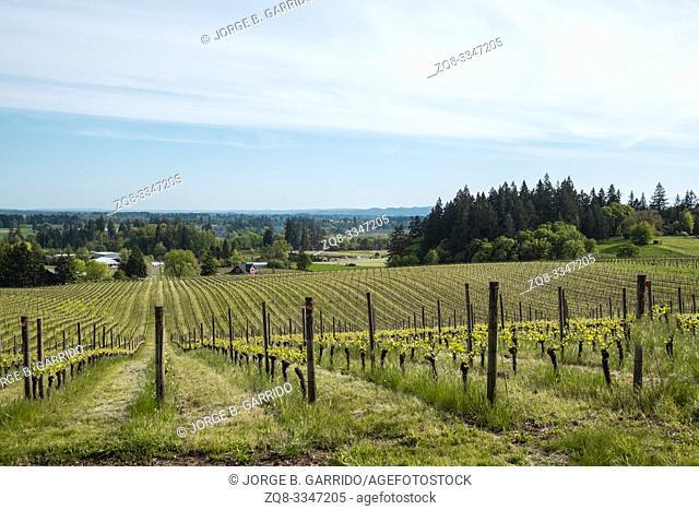 Sokol Blosser winery and tasting rooms. Dayton. Oregon