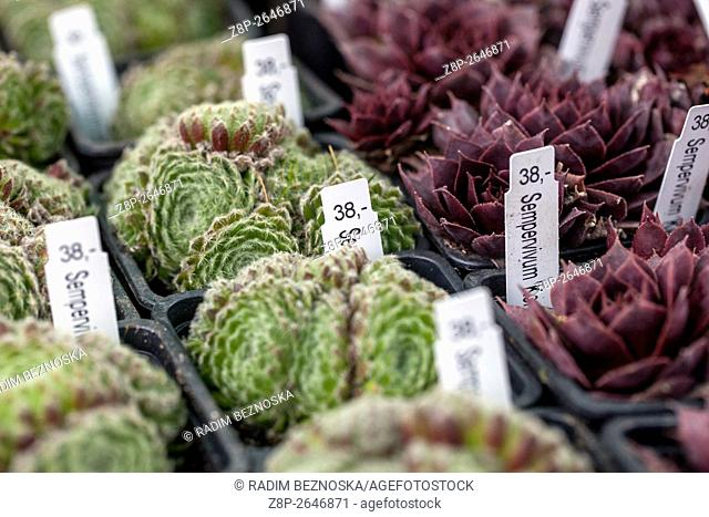 Rockery plants in pots for sale Farmers Market