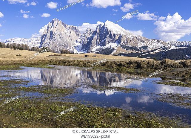 Alpe di Siusi/Seiser Alm, Dolomites, South Tyrol, Italy. View from the Alpe di Siusi to the peaks of Sassolungo/Langkofel and Sassopiatto / Plattkofel