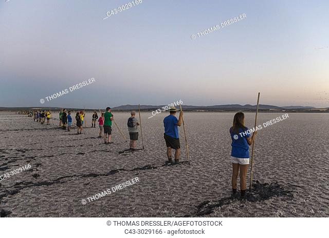 Volunteers at dawn at the Laguna de Fuente de Piedra near the town of Antequera. Waiting for the start of the immature Greater Flamingos (Phoenicopterus roseus)...