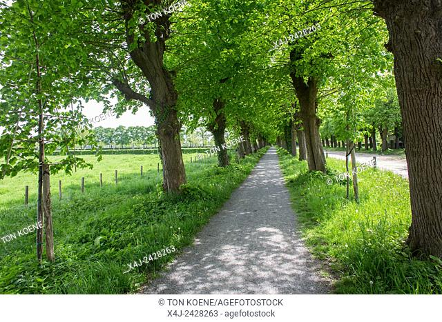 walking lane in summer in Belgium