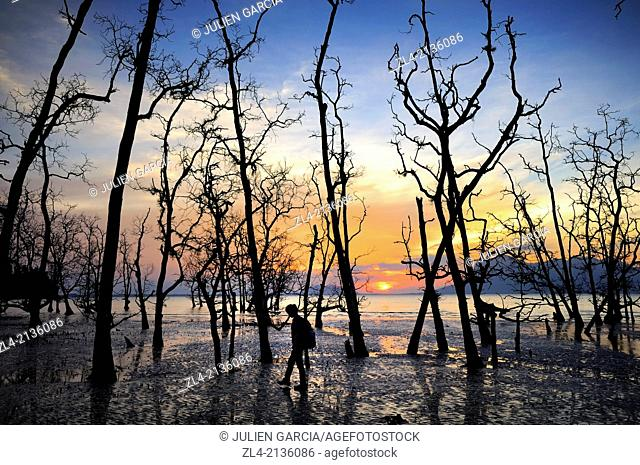 Silhouette of a woman hiking among trees and mangrove at sunset at Telok Assam beach. Malaysia, Borneo, Sarawak, Bako National Park. Model Released