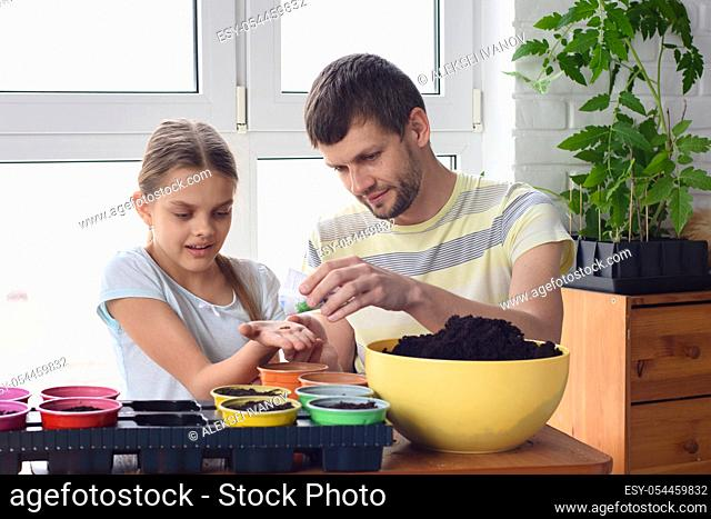 Dad and daughter plant seeds in pots in spring