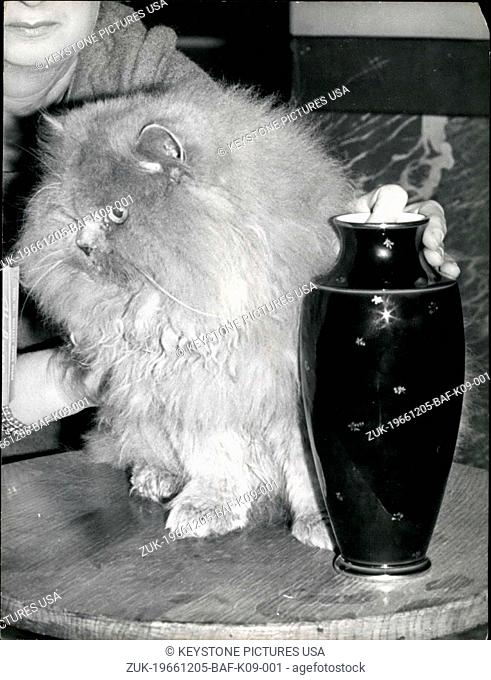 Dec. 05, 1966 - Winner of the Cat Show: 'Starlight Baron', a Persian with Blue Eyes, 15 months old, was awarded the first prize at the International cat show in...