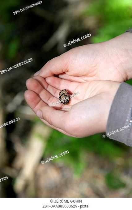 Child's hands holding tiny pine cone