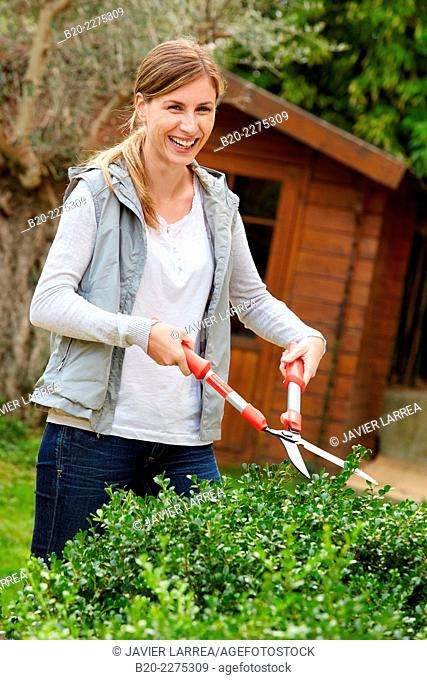 Woman with pruning shears cutting the hedge. Garden