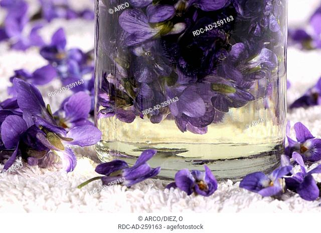 Sweet Violet oil Viola odorata