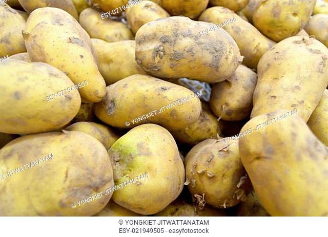 Raw potato tubers
