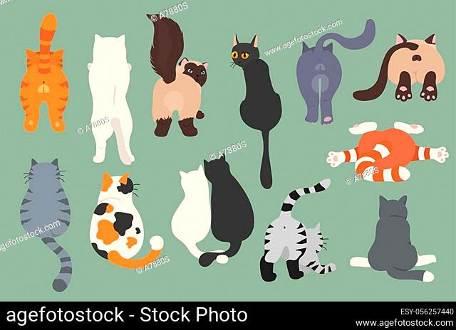 Cats poses behind. Cat`s butts. Flat design clipart. Vector illustration