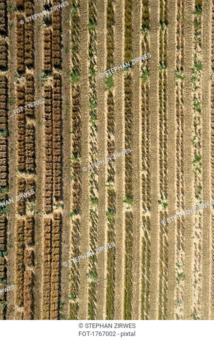 Aerial view agricultural trial fields, Hohenheim, Baden-Wuerttemberg, Germany