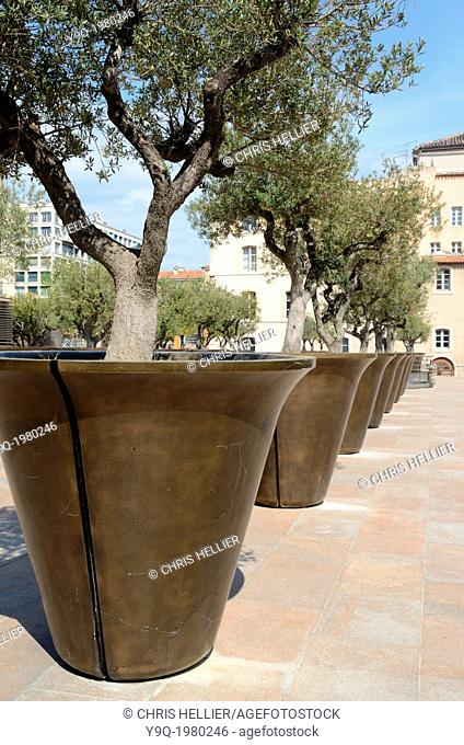 Row of Giant Planters or Flower Pots with Olive Trees Marseille France