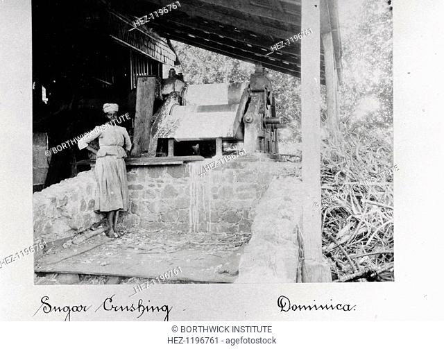 Woman stands in a sugar crushing mill, Dominica, 1897. A pile of sugar cane can be seen to the right of the photo