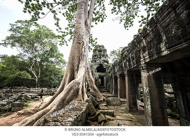 Big tree of Banteay Kdei Temple, Angkor compound (Siem Reap Province, Cambodia)
