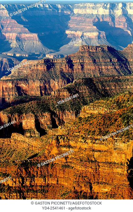 Grand Canyon North Rim, Grand Canyon National Park, Arizona, USA