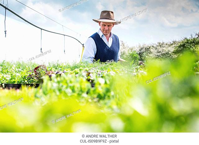 Farmer harvesting plants
