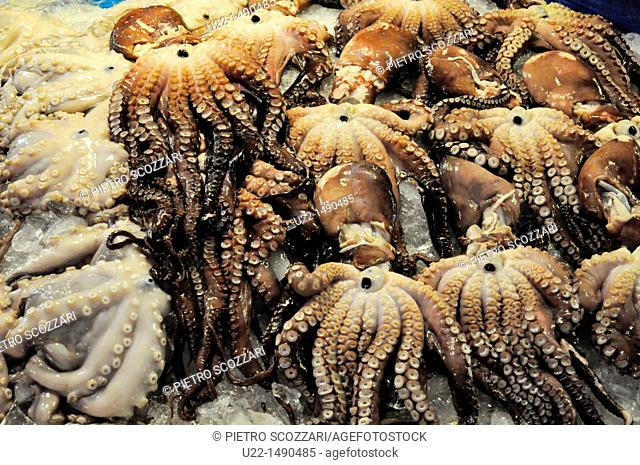 Busan (South Korea): fresh octopuses sold at the Bujeon Market