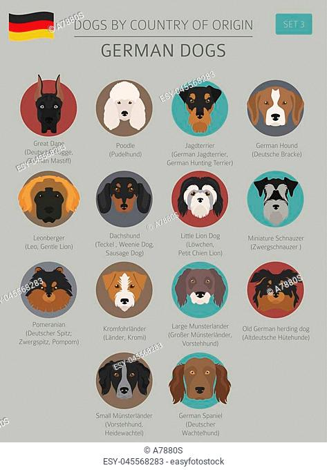 Dogs by country of origin. German dog breeds. Infographic template. Vector illustration