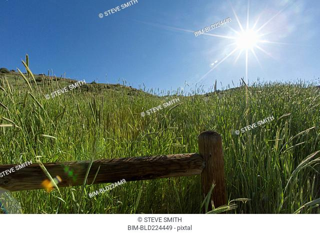 Tall grass and wooden fence on hill