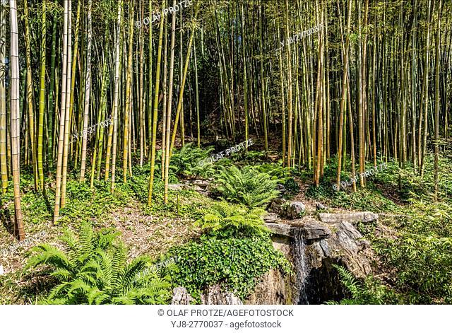 Bamboo Garden at the Botanical Garden of Villa Carlotta, Tremezzina, Lake Como, Lombardy, Italy