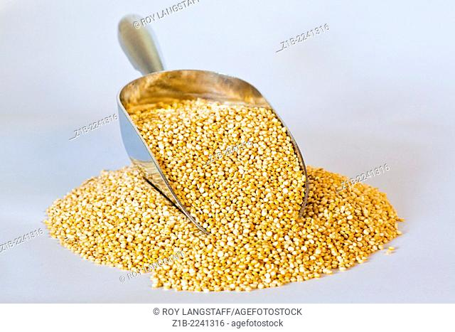 Small mound of Quinoa grains with a metal scoop
