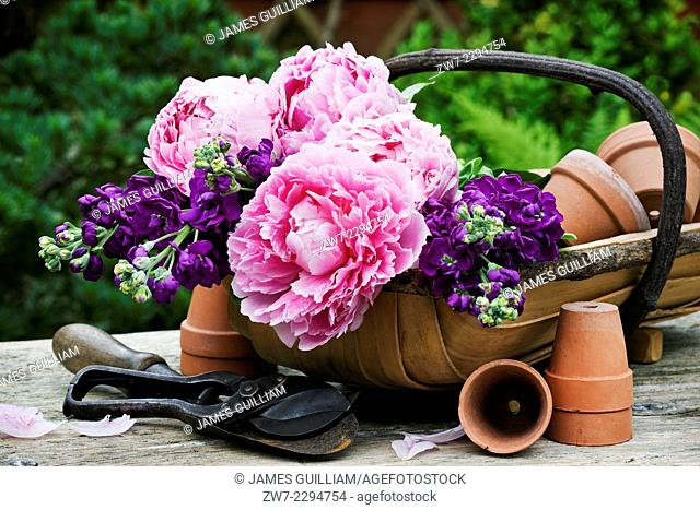 Garden trug filled with Peony and Stock flowers