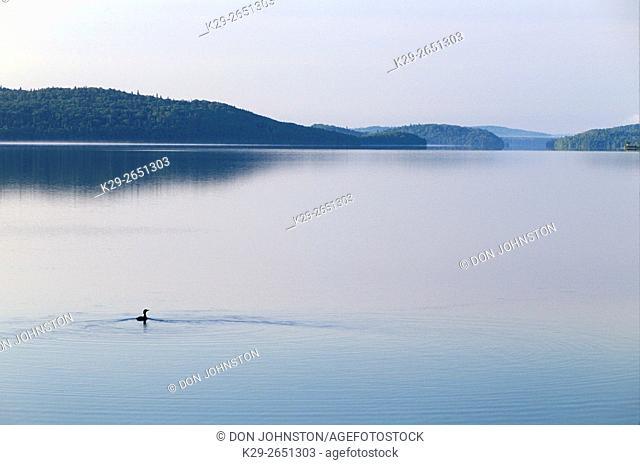 Common loon cruising on calm waters of Wakimi Lake in morning, Wakimi Lake PP, Ontario, Canada