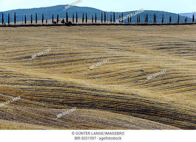 Tuscan landscape in the Crete Senesi region