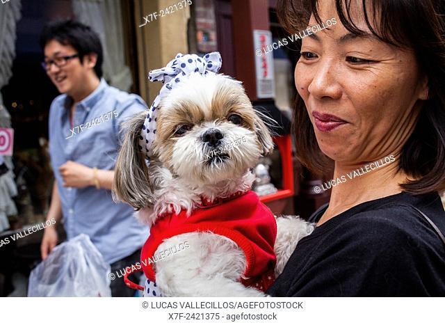 woman with dog in Senso-ji Temple, Asakusa,Tokyo city, Japan, Asia