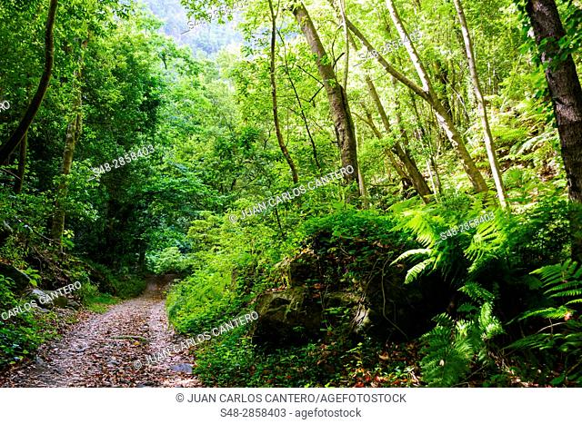 Path of Cubo de la Galga La Palma. Canary Islands. Spain. Europe