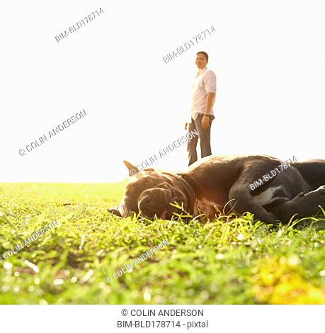 Lazy dog laying in field