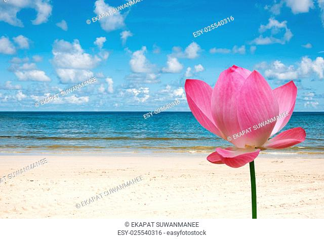 Beautiful nature and beautiful of sea with pink lotus