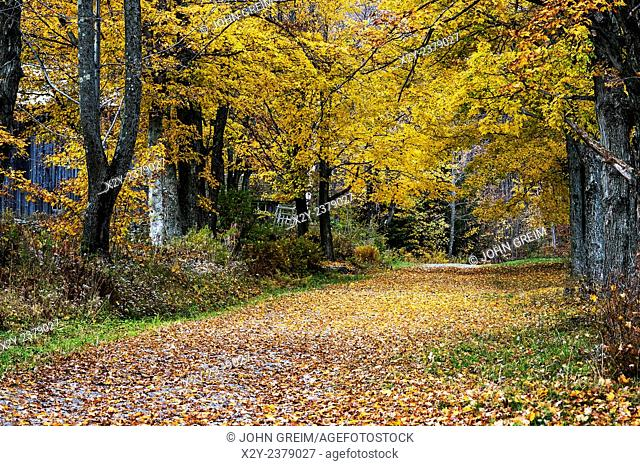 Autumn country road, Vermont, USA