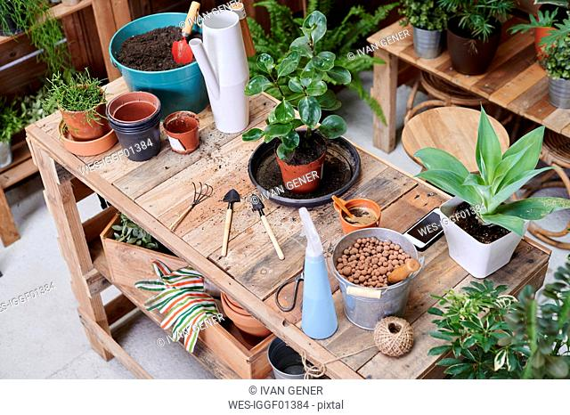 Wooden table with potted plants and gardening tools on a terrace