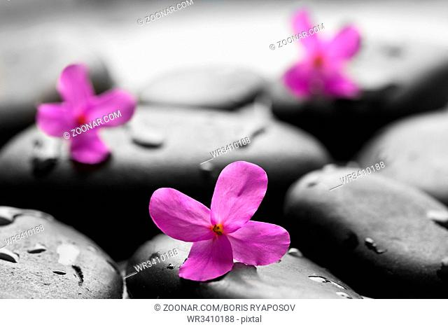 Black wet pebbles with flowers background