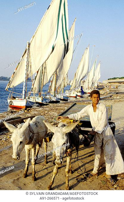 Boy driving two donkeys and feluccas in background. River Nile from the east bank. Luxor. High Egypt. Egypt