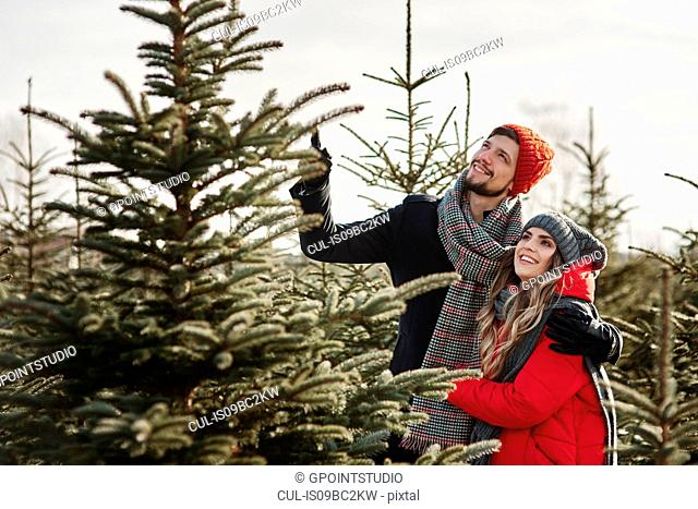 Young couple choosing a christmas tree from forest