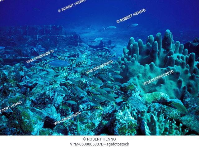 USA - BAHAMAS - SUGAR WRECKWITH SHOAL OF FISH