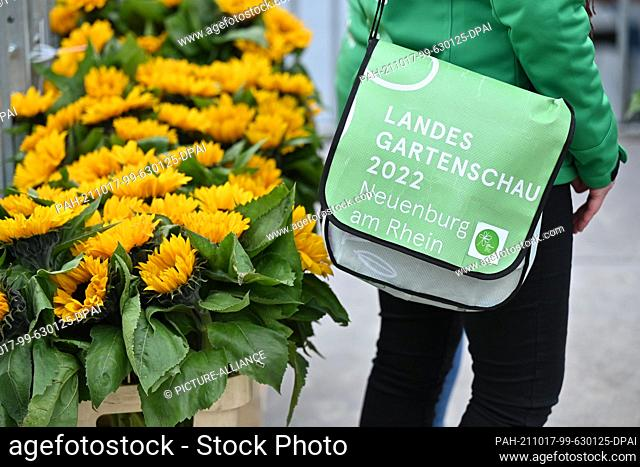 17 October 2021, Baden-Wuerttemberg, Ìberlingen Am Bodensee: An employee of the State Horticultural Show from Neuenburg am Rhein stands with her State...