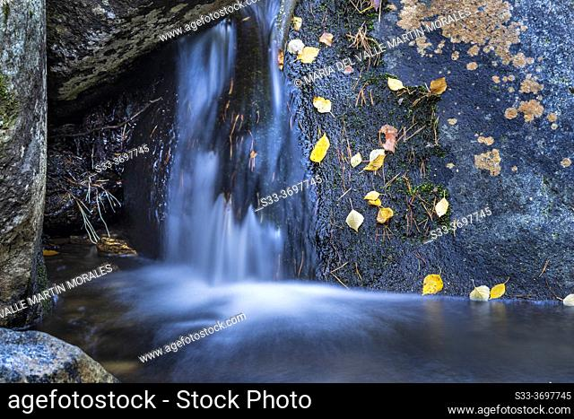 Autumn in the Sestil stream in Canencia Birch. Sierra de Guadarrama. Madrid. Spain. Europe